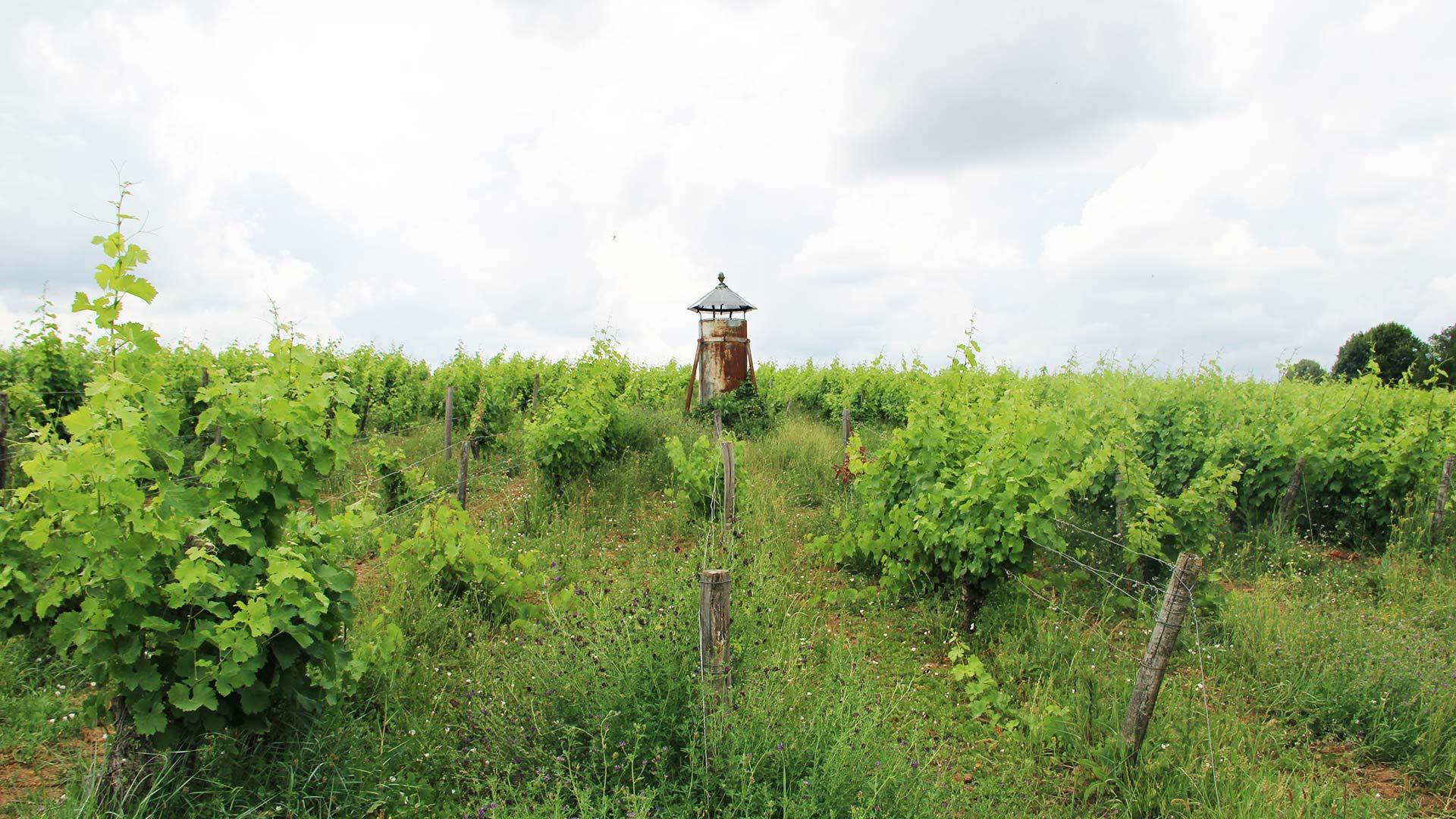 ClosRoussely-Vignes-chemineee
