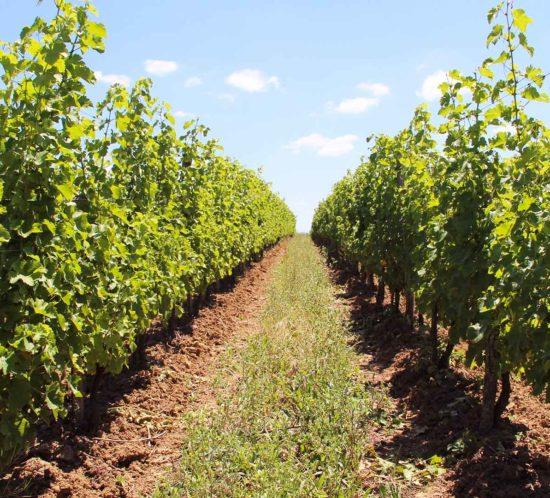 julien,auroux,vignes,bergerac