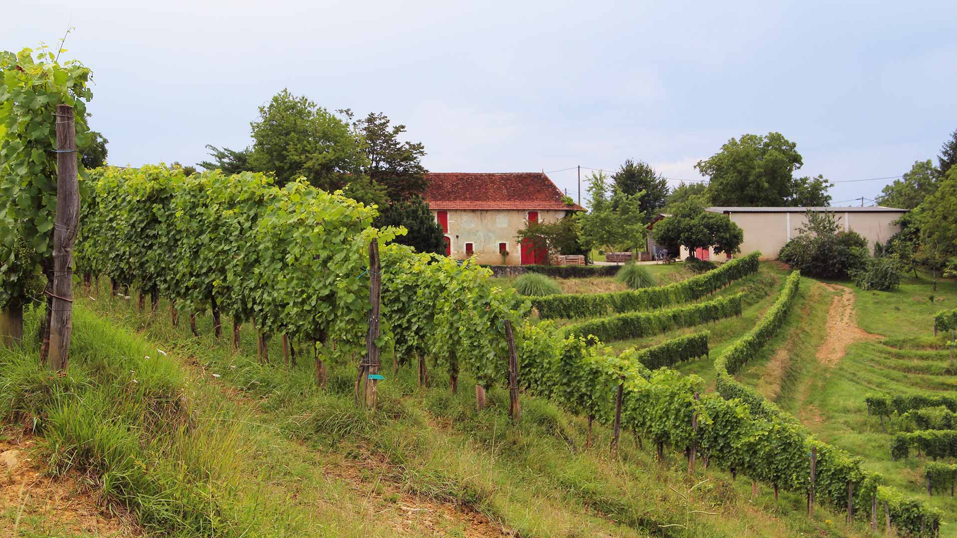 jurancon-domaine-larreydia-vignes-maison