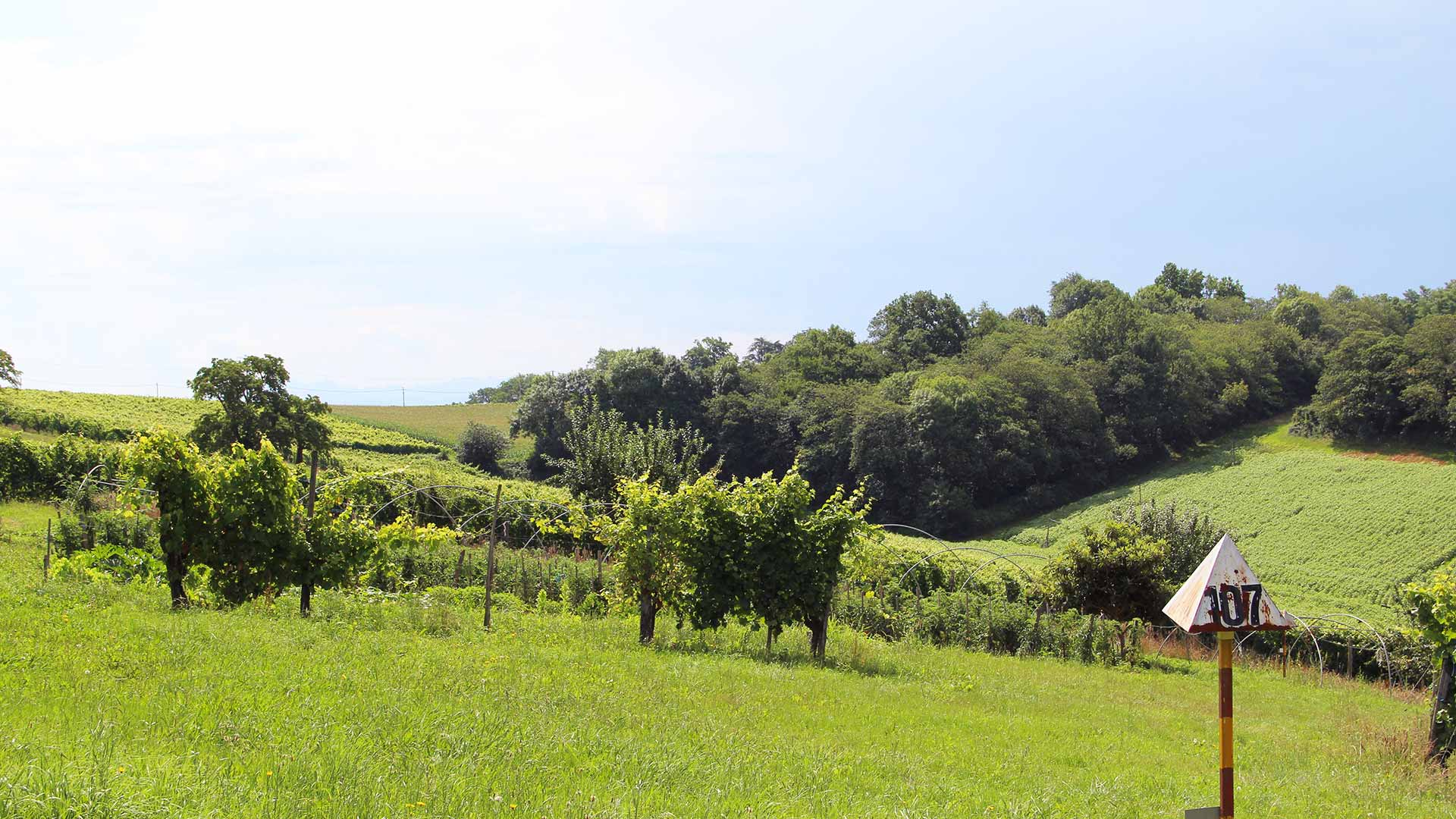 jurancon-vignes-clos-thous-paysage