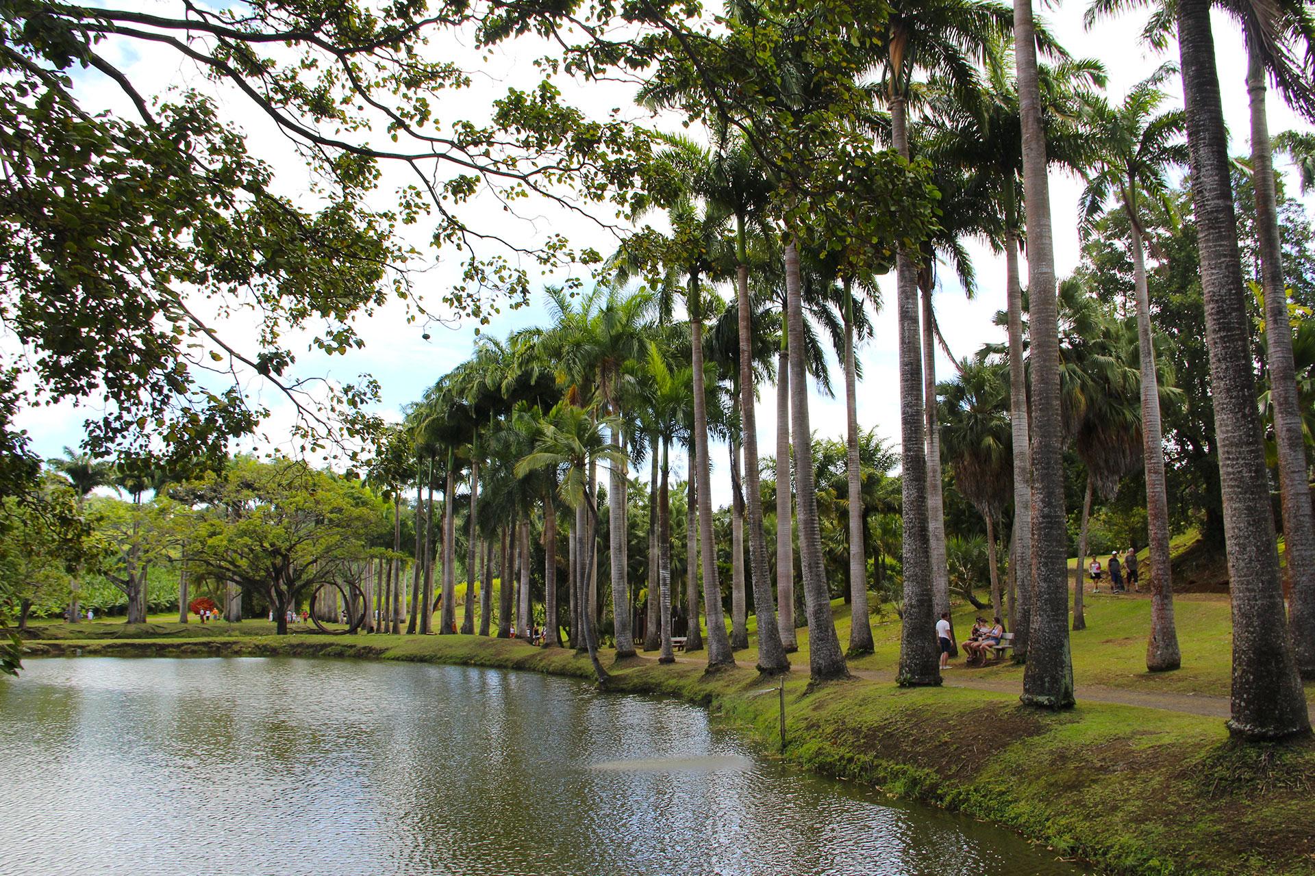 Palmiers-allee-Fondation-Clement
